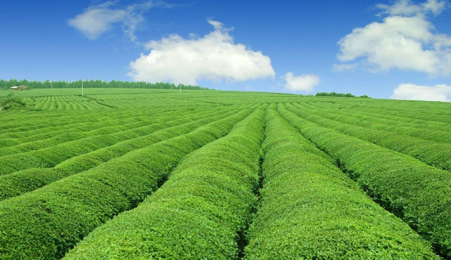 物联传感云,农作物的贴心小管家